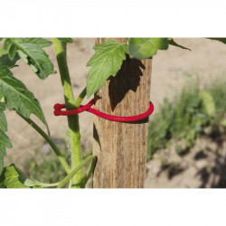 CLIPS SPECIAL TOMATES ROUGE